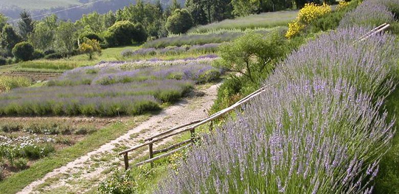 Piante Curative : Erbe officinali le piante curative che creano atmosfera